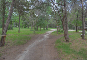 Big Cedar Wilderness Trail -  Cedar Hill, TX