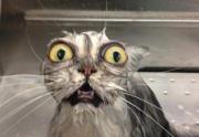 real estate meme - scared cat